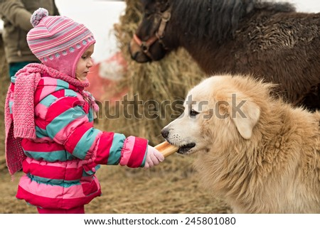 little girl feeding a dog - stock photo