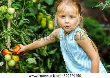 Little girl helping her mother with tomato in the garden, childhood - stock photo