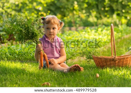 Little girl in the garden, harvest in a large basket: carrots, beets, parsley. Sunset