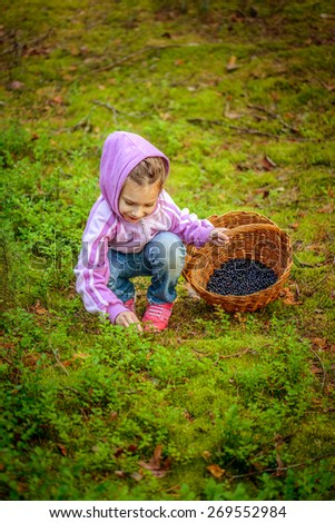 Little girl pick blueberries in summer dense forest. - stock photo