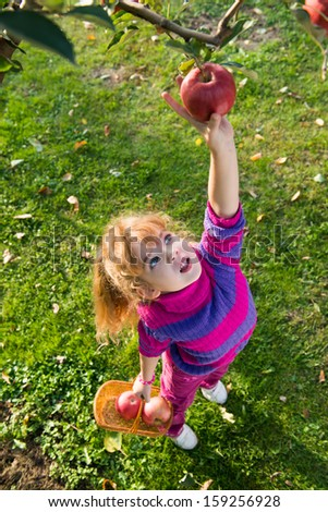 little girl picked ripe apples - stock photo