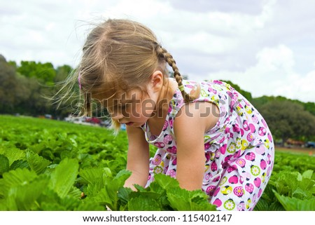 Little girl picking strawberries on a field