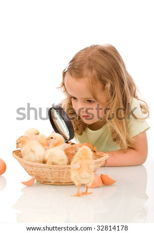 Little girl studying a basketful of chicks with a large magnifier - isolated - stock photo