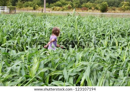 Little girl walking in a field of corn - stock photo