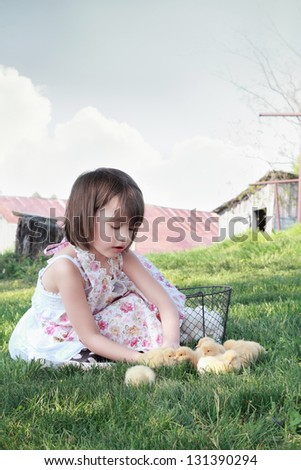 Little girl watching young yellow chicks  with chicken coop and barn in far background. Extreme shallow depth of field. - stock photo