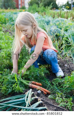 Little girl with bunch of carrots in vegetable garden - stock photo