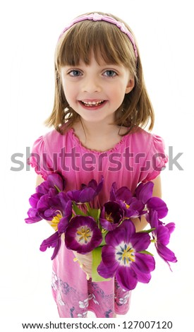 little girl with bunch of tulips - mothers day - stock photo