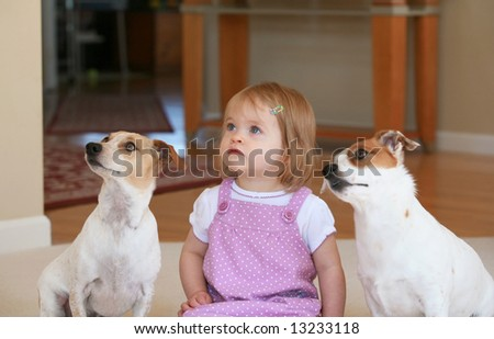 Little Girl With Two Dogs - stock photo