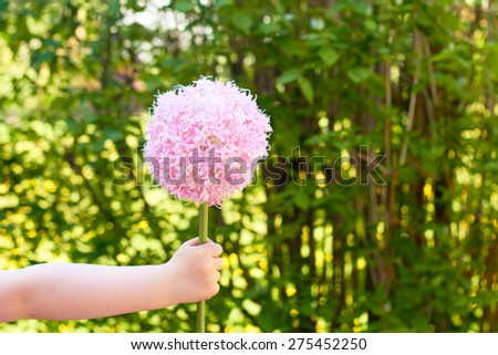 little girls hand holding a flower on mothers day - background for greeting card - stock photo