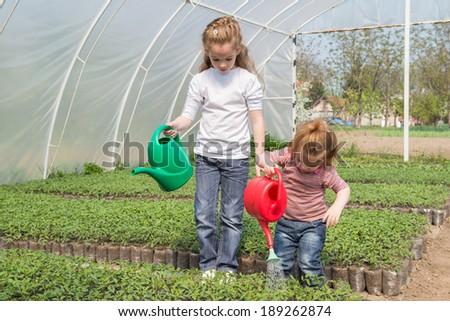 little girls watering seedlings Tomato - stock photo