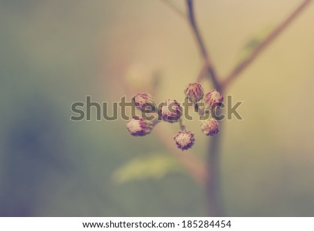 Little grass flowers in vintage style - stock photo