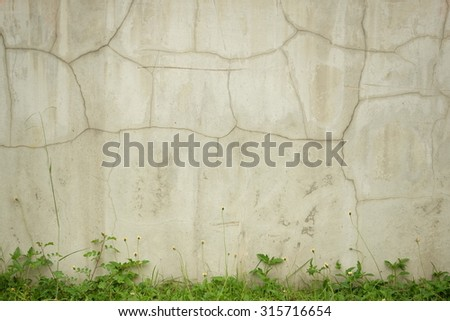 Little grass with cement wall. - stock photo