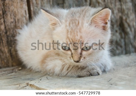 Little gray cat, playing in the yard, on the wood background,