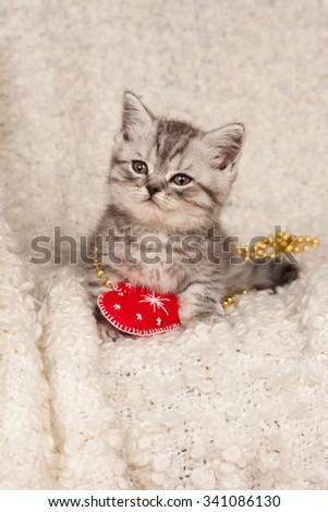 little gray kitten on a light background  - stock photo
