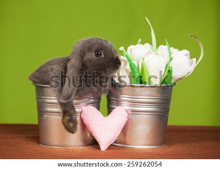 little gray rabbit  in a bucket with a heart and flowers  - stock photo
