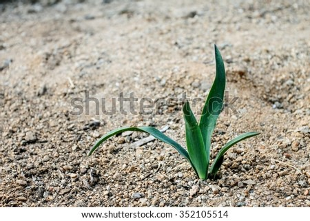 Little green baby plant coming out of the ground. - stock photo