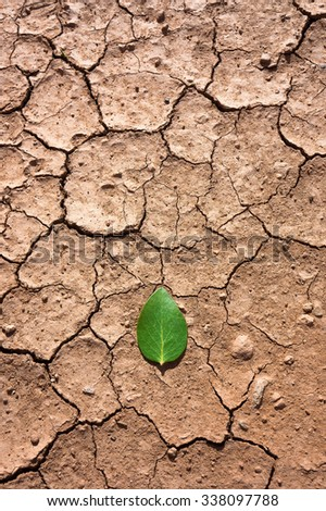 little green leaf in a teardrop shape on a dry, cracked ground