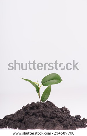 Little green plant growing in a heap of soil isolated on white background. Concept of new life - stock photo