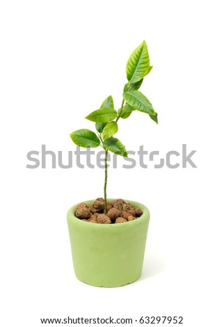 Little Green Plant in Ceramic Pot Isolated on White Background