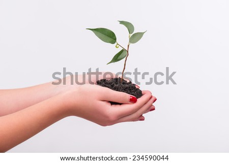 Little green plant in the hands of woman isolated on white background. Concept of new life