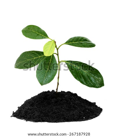 little green plant isolated on white background - stock photo