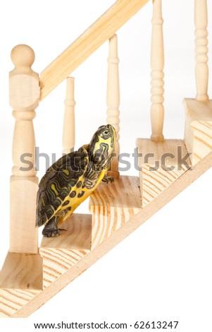 Little green turtle moving up slowly on a wooden stair, making progress - stock photo