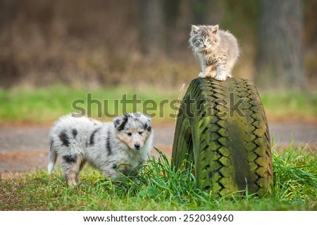 Little grey kitten playing with rough collie puppy - stock photo
