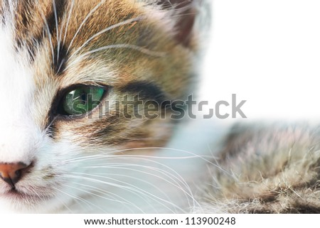 Little grey kitty cat with green eyes isolated on white - stock photo