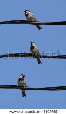 little grey sparrows on a wire with blue sky - stock photo