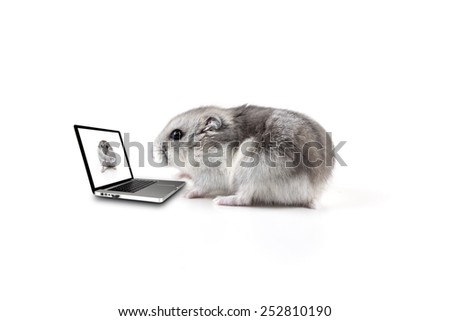 little hamster typing on a computer - stock photo