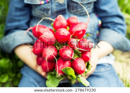 Little hands holding a bunch of radishes, close up - stock photo