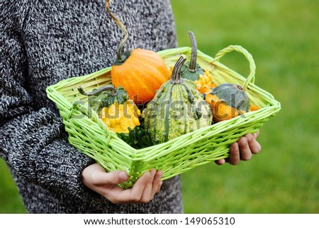 little hands with pumpkin - fall time - stock photo