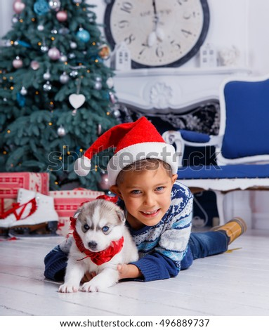Little handsome boy sitting with gift - Husky puppy in a beautiful room with a Christmas tree