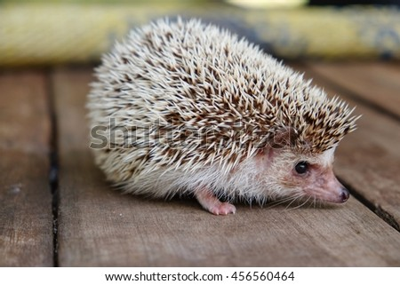 Little hedgehog on wooden