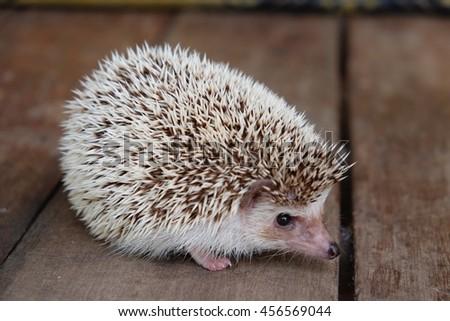 Little hedgehog on wooden - stock photo