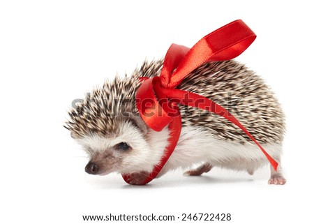 Little hedgehog tied with red ribbon isolated on white - stock photo