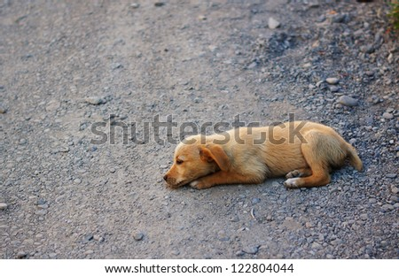Little homeless dog outdoor - stock photo