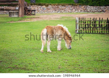 little horse on field green grass - stock photo