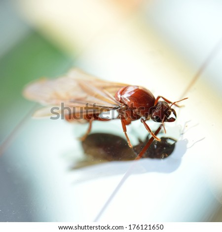 Little insect, termite white ant - stock photo
