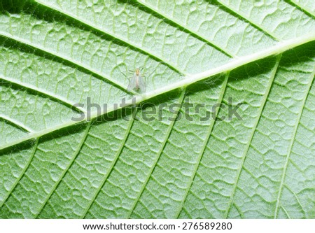 little insect under leaf - stock photo