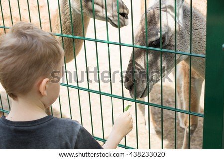 Little kid feeding big lama through a cage in zoo. Cute little boy feeding alpaca green beans in farm. Active leisure with children outdoors. Child feeds two llamas at pet zoo.