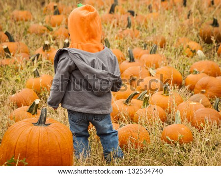 Little kid picking pumpkin at the pumpkin patch in early Autumn.