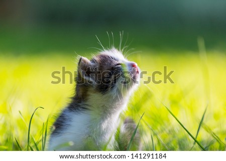little kitten - stock photo