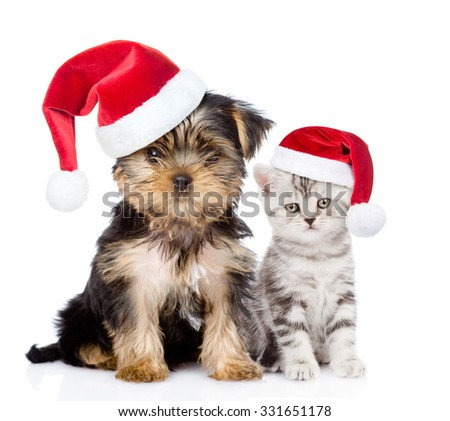 Little kitten and puppy  in red christmas hats sitting together. isolated on white background