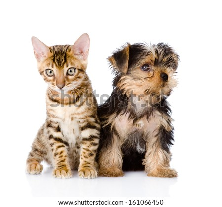 little kitten and puppy together. isolated on white background - stock photo