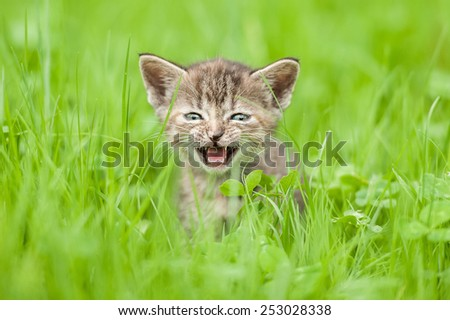 Little kitten crying in the grass