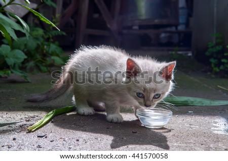Little kitten drink milk in the sun - stock photo