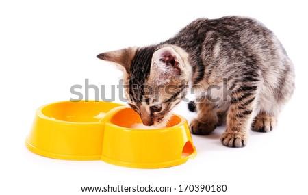 Little kitten drinks milk isolated on white - stock photo
