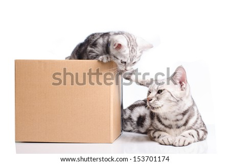 little Kitten in a box fun with mom cat  on a white background - stock photo