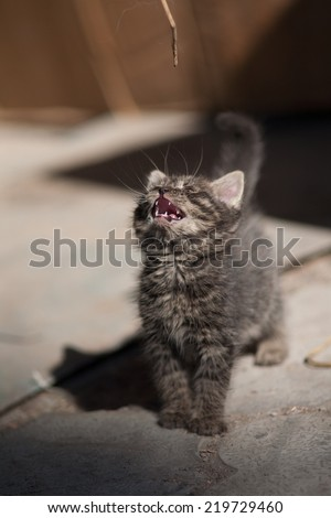 Little kitten in her arms - stock photo